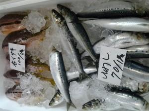 20130624 今日の魚1